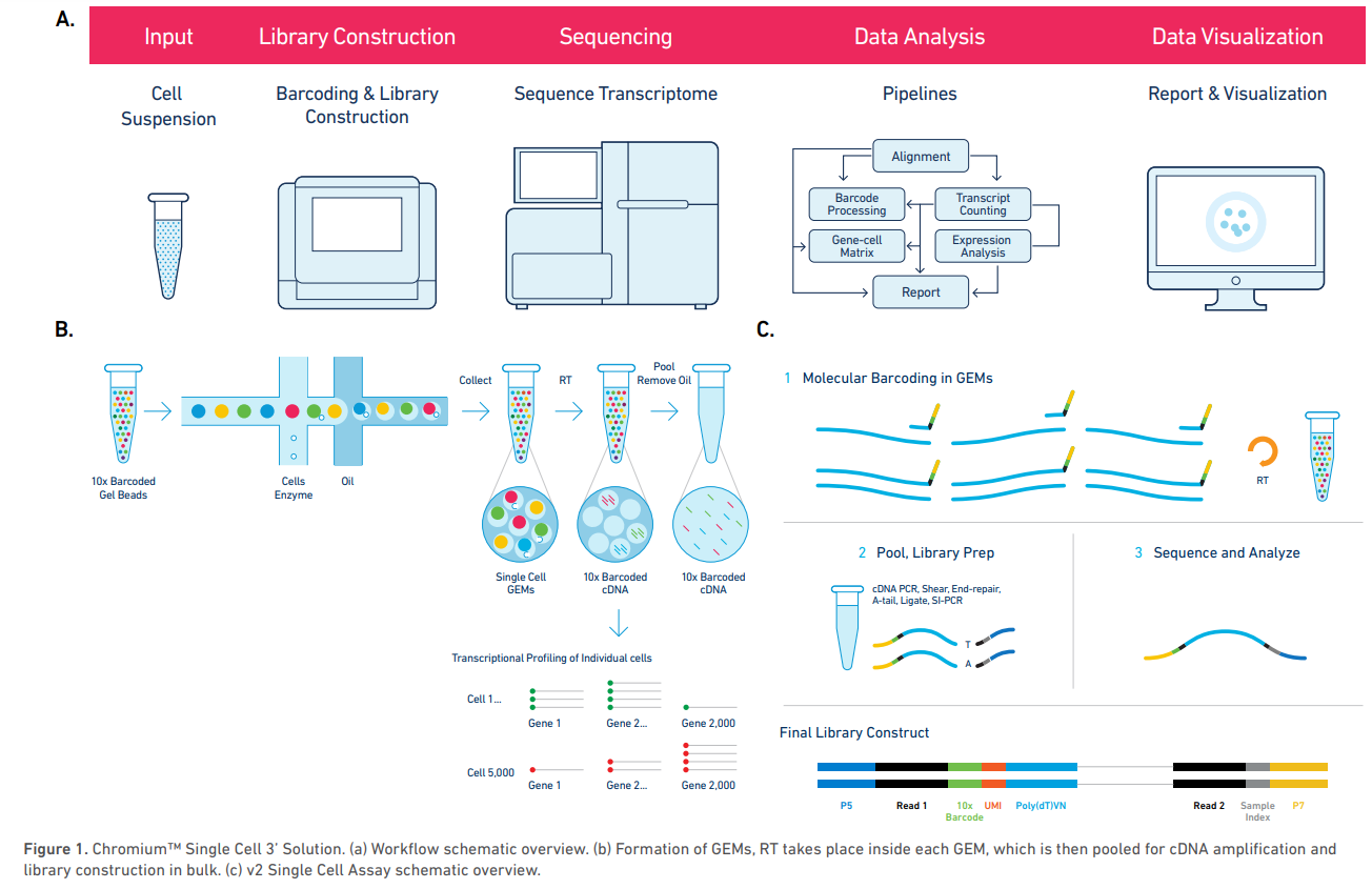 Overview of single-cell workflow